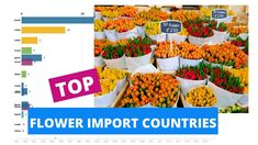 Top flower Import countries Horticulture, Countries, Training, Flowers, Top, Tulips, Garden Planning, Work Outs, Excercise