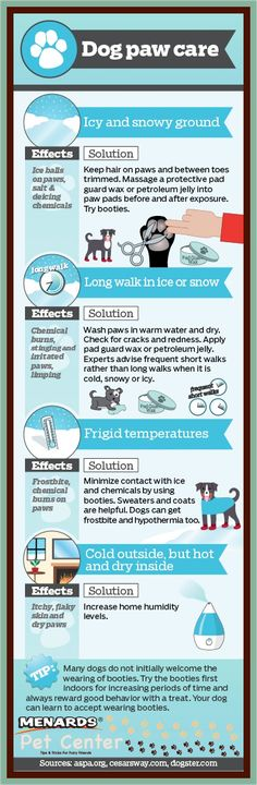 Like our own feet, our dogs' paws need caring for too. Try these winter dog paw care tips for a happy pooch! http://www.menards.com/main/c-19276.htm?utm_source=pinterest&utm_medium=social&utm_campaign=petcenter&utm_content=paw-care&cm_mmc=pinterest-_-social-_-petcenter-_-paw-care