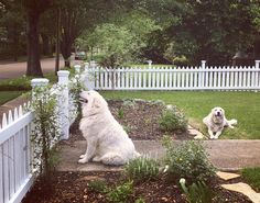 We can't imagine a friendlier welcome than a classic white picket fence (and the couple's two adorable Great Pyrenees pups: Baker, a rescue, and Chevy, who came from a working farm). Tour Ben and Erin Napiers House - Home Town House Tour in Laurel, Mississippi