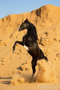Horse rearing up stomping the desert sand quite well!
