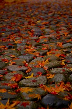 落ち葉 by Sawai Yatta, via 500px