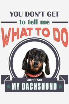 Dachshund Art, Dachshunds, To Tell, Dog Breeds, Dogs, Animals, Heart, Pet Dogs, Dachshund