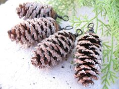 sugared pinecones
