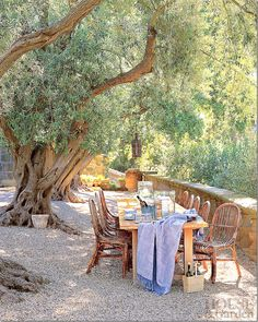Outdoor dining under an ancient olive tree