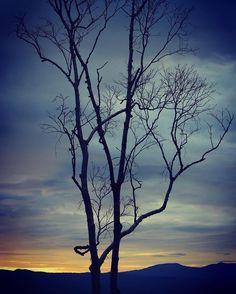 Niseko Hokkaido - Morning glow at Zaborin, a beautiful onsen lodge  #niseko #hokkaido #japan #zaborin #morningglory #sunrise #woods  #travel #instatravel #travelglam #traveler #instatraveler #instaphoto  #ニセコ #北海道 #坐忘林 #朝焼け #日の出 #日本 #林  | zaborin.com