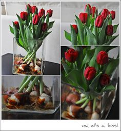 how to grow tulips in a vase indoors diy pinterest pflanzen. Black Bedroom Furniture Sets. Home Design Ideas