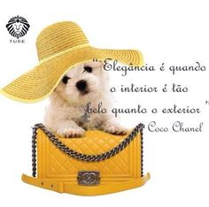 Fica a dica !  #mensagemdodia Four Square, Teddy Bear, Animals, Thoughts, Frases, Animaux, Animal, Animales, Teddybear