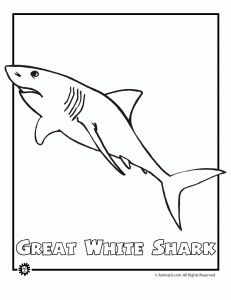 endangered great white shar 231x300 Endangered Ocean Animal Coloring Pages  FREE PRINTABLE