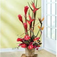 Cheapest international flower delivery service in USA with same day flower delivery by FlowerAdvisor international florist. Send flowers online internationally, gifts, bouquet of roses to someone overseas. Online Flower Shop, Send Flowers Online, Flower Delivery Service, Same Day Flower Delivery, Cake Online, Rose Bouquet, Floral Arrangements, Anniversary Gifts, Birds