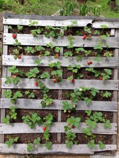 How to make a better strawberry pallet planter . - How to make a better strawberry pallet planter PalletP - Vertical Pallet Garden, Herb Garden Pallet, Pallets Garden, Pallet Gardening, Vegetable Garden, Vegetable Planters, Diy Planters, Garden Planters, Pallet Planters
