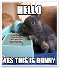 The First Talking Bunny So This what Briar does when we are not in the classroom kids!