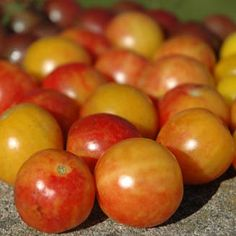New for 2014 Tomato Bi-Colour Cherry