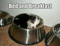 Cute Dog Pictures with Captions | Cute Dogs with Captions for Monday | Michael Bradley - Time Traveler