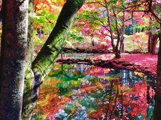 """軽井沢の雲場池 釵丹さんのツイート: """"昨日、用事で軽井沢に行って来ました…とても美しかった… 日本っていいなぁと思いました これ無加工なんですぜ!"""