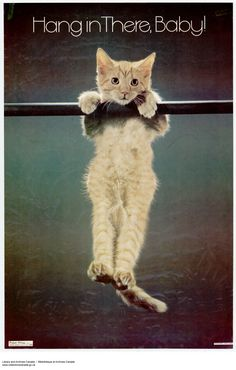 Hang in there, Baby! Original Cat Poster