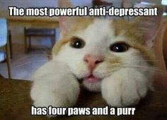 Antidepressant, hypertension  and stress cure, all in one furry package