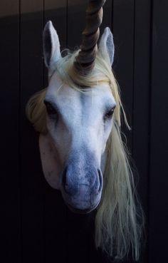Faux Taxidermy Unicorn Head Animal Friendly by BrokenHare on Etsy