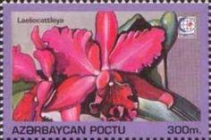 Sello: Laeliocattleya (Azerbaiyán) (Orchids.International Stamp Exhibition Singapore'95) Mi:AZ 251,Sn:AZ 497,Yt:AZ 242W,Sg:AZ 263