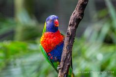 Bravard Aviary Colorful Bird  #brevardzoo #nature #wildlife