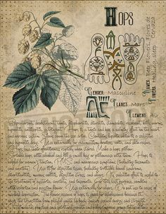 Book of Shadows page. Sorry, This page is only available to my customers for free, I don't sell it in the Etsy Magic Herbs, Plant Magic, Herbal Magic, Green Witchcraft, Wiccan Spells, Grimoire Book, Witch Herbs, Modern Witch, Practical Magic