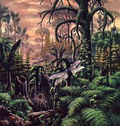 Carbonifère - Vestiges des temps jadis