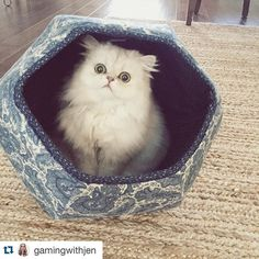 """The cuteness just got started. If you thought to yourself, """"This cat looks like Cloud, from @gamingwithjen"""" then you're right. ☁️ #Repost @gamingwithjen with @repostapp. ・・・ Cloud loves his new cat ball! #thecatball ☁️"""