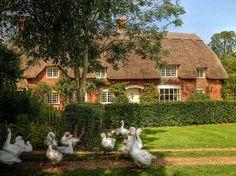 Thatched cottage and geese in the New Forest, Hampshire by Anguskirk, via Flickr