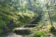 Old stairs in nature