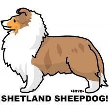 how to draw a shetland sheepdog