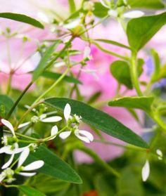 Projekti etenee... -kukkien valinta | @ Asuntomessublogit / Pinnan alla Plant Leaves, Plants, Plant, Planets