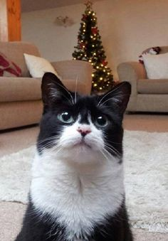 How can you Help a Cat this Christmas? | Vet Medic Blog