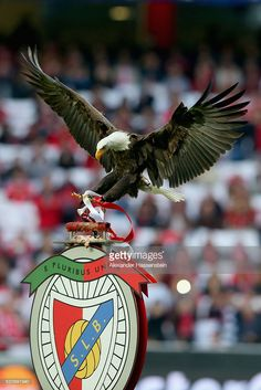 The Benfica eagle arrives prior to the UEFA Champions League quarter final second leg match between SL Benfica and FC Bayern Muenchen at Estadio da Luz on April 13, 2016 in Lisbon, Portugal.