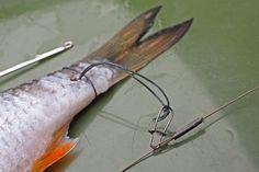 So hält der Köderfisch jedem Wurf Stand