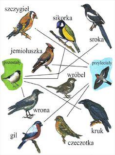 Użyj STRZAŁEK na KLAWIATURZE do przełączania zdjeć Learn Polish, Polish Language, Montessori Education, School Art Projects, Toys For Boys, Biology, Animals And Pets, Homeschool, Birds