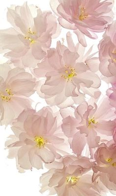 Cute background or screen saver for the iPhone .. Floral