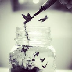 Inked Birds