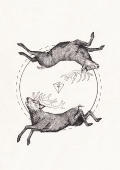 Peter Carrington, 2 Dead Deer and a Pyramid, Graphite on paper, 2013