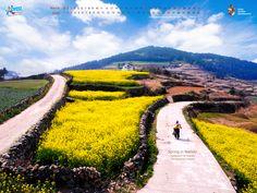 Spring in Namdo (Jeollanam-do Wando, Cheongsando Island)