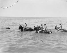 Gallipoli Soldiers taken their horse into the sea