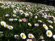 Dreamy flowers in the garden