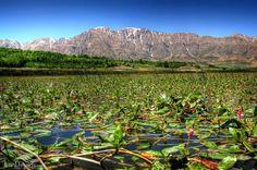 Choghakhur wetland, Shahrekurd city, Chaharmahal province, Iran (in Persian: . تالاب بين المللي و زيباي چغاخور,  استان چهار محال و بختیاری)