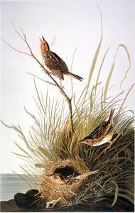 Giclee Print: Finch Wall Art by John James Audubon by John James Audubon : Framed Artwork, Wall Art Prints, Canvas Prints, Audubon Prints, Audubon Birds, John James Audubon, Your Spirit Animal, Pet Birds, Find Art