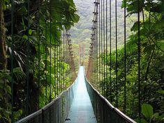 monteverde, cloud forest