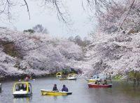 東京吉祥寺Inokashira Park / Official Tokyo Travel Guide GO TOKYO