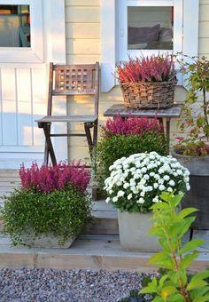 Kanelia ja kardemummaa - Gardening Tips Container Flowers, Container Plants, Container Gardening, Patio Plants, Landscaping Plants, Fall Planters, Garden Planters, Balcony Flowers, Fall Containers
