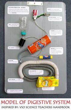 Modello di sistema digestivo realizzato con materiali di scarto!