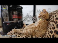 Funny Cats Funny Cat Videos cats Funny Videos 2016 cat Videos cats - http://positivelifemagazine.com/funny-cats-funny-cat-videos-cats-funny-videos-2016-cat-videos-cats/ http://img.youtube.com/vi/555rix_oSzg/0.jpg                                             Funny Cats Funny Cat Videos Best Funny Videos 2016 Funny Videos Compilation Funny Cats Funny Cat Videos Best Funny Videos 2016 Funny Videos …    source                                   Please follow and lik