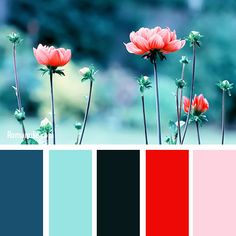 in_color_balance_70