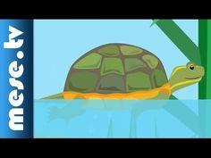 Gryllus Vilmos : A teknősbéka (gyerekdal, mese, Félnóta sorozat) - YouTube Grinch, Youtube, Youtube Movies