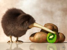 Prints: Kiwifruit, or just kiwi, is a large oval berry that is grown in several countries, most notable though is New Zealand. Kiwi Bird and Kiwifruit Kiwi Bird, Bird Stand, Ostriches, Flightless Bird, Cute Images, New Zealand, Fine Art America, Illustration, Tapestry